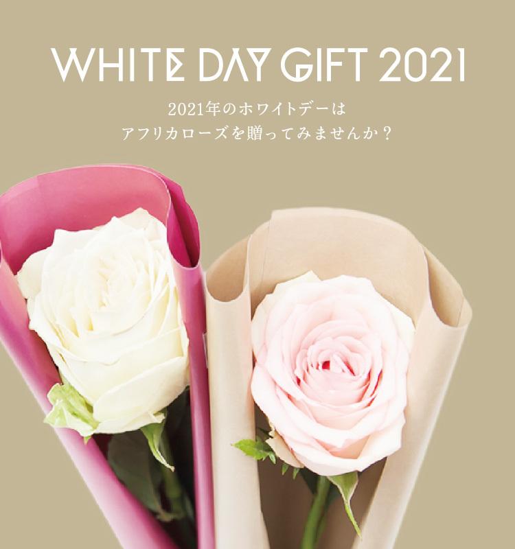 AFRIKA ROSEのホワイトデー特集 2021年のホワイトデーはアフリカローズを贈ってみませんか?